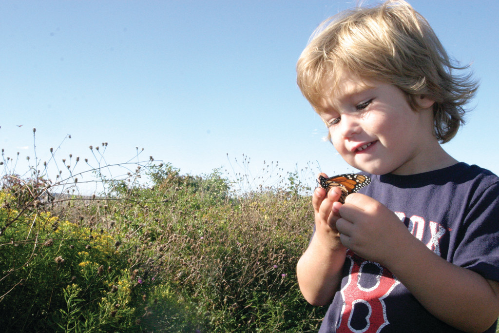 BUTTERFLIES IN HIS STOMACH: Caden Moitoso, 3, of Warwick, holds a Monarch butterfly at Beavertail State Park in Jamestown Sunday afternoon. He, along with his parents and many others, enjoyed seeing a plethora of Monarchs along the shoreline, as the beautiful bugs have begun their annual migration to Mexico.