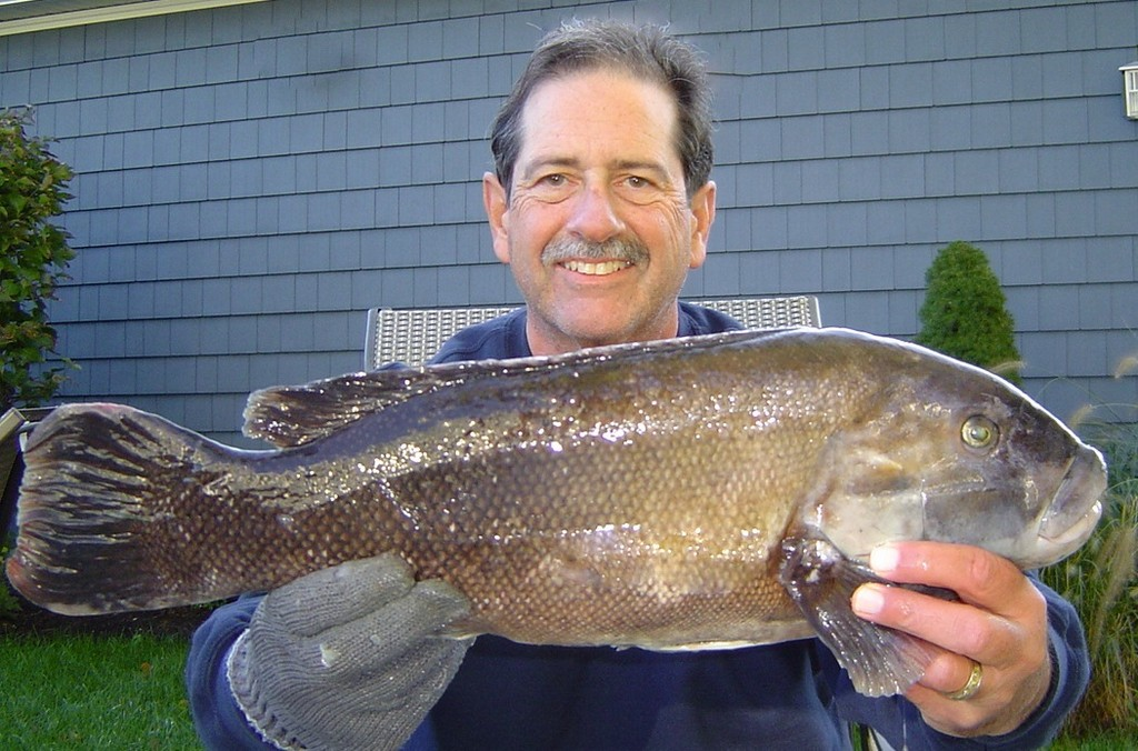 Tautog rig reduces bottom fishing tie-ups:  This tautog was caught using a homemade rig designed by Capt. Monti.  An egg sinker on a 3 to 4 inch piece of monofilament with swivels on either end and a single hook below.  The bait hangs freely between bottom structure (rocks), reduced hardware and the egg sinker allowed to slide has cut bottom tie-ups in half.