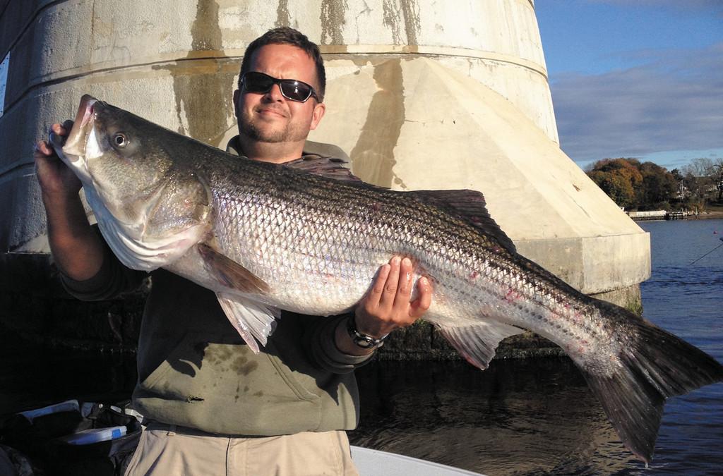 Bass after storm: Corey Smith caught this 35 pound striped bass in Mt. Hope Bay Sunday.  He put an eel out while tautog fishing and the bass took it.