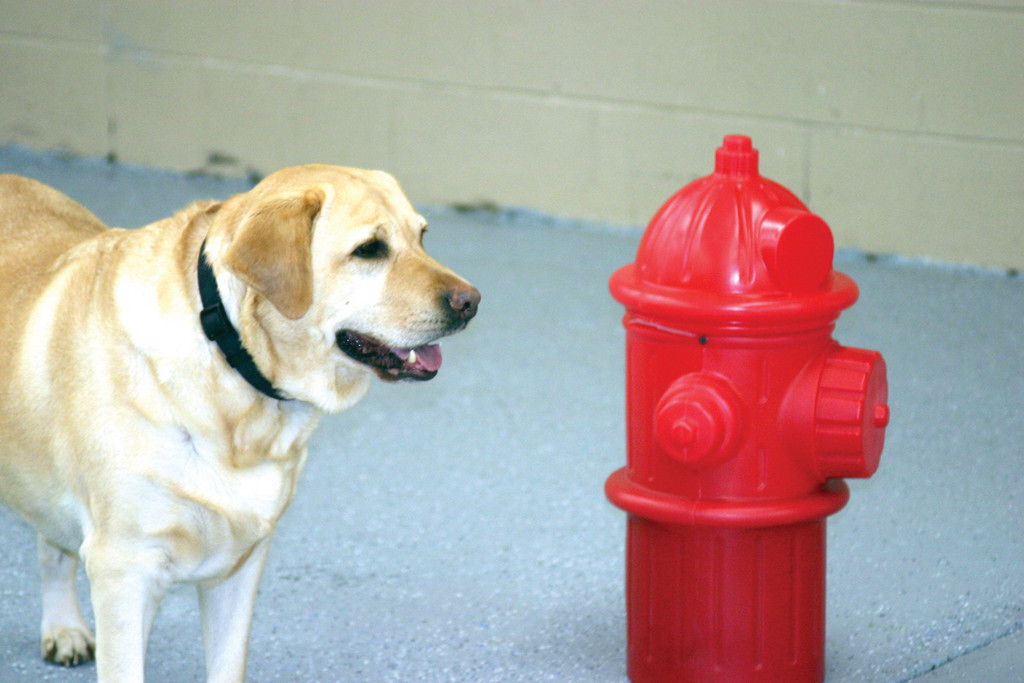 YOU LOOKING AT ME? Tigger, the beloved dog of Bow Chika Wow Town's owner, Alisa Paykos-Theurer, stares at a faux fire hydrant, which stands in the indoor dog park.