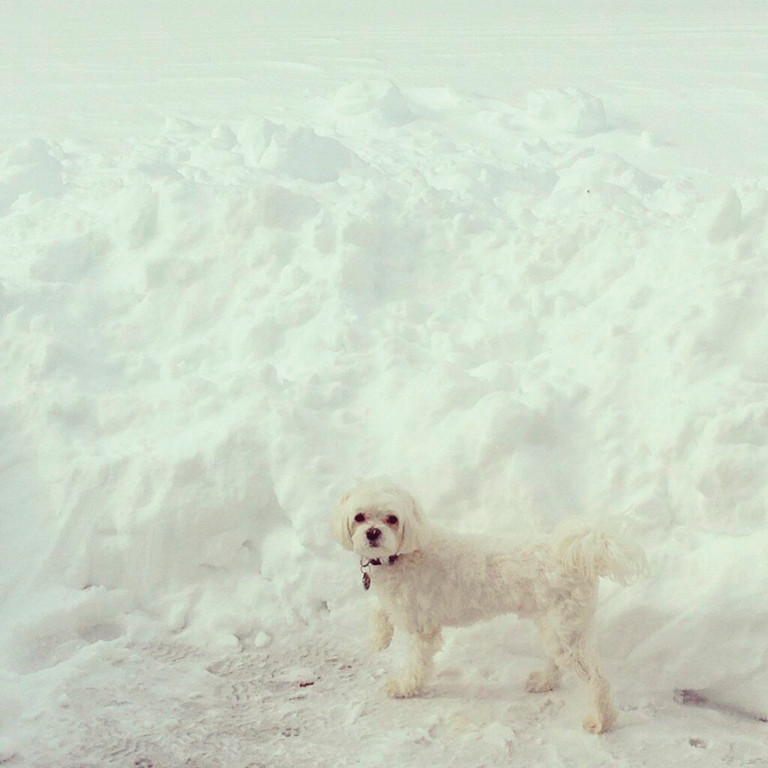 FIND THE PUPPY: Cranston School Committee Chairwoman Andrea Iannazzi's dog, Clinton, is barely visible in the mountain of white that Nemo brought.