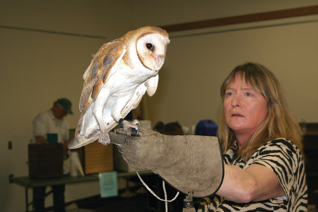 BONNIE THE BARN OWL: Vivian Maxson explains that Bonnie is a 3-month-old Barn Owl that was injured when she fell out of a cupola as a baby