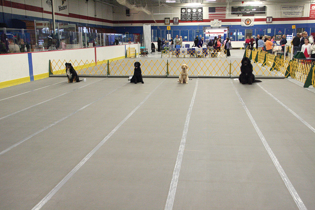 THE LONG WAIT: As part of obedience trials, owners must leave their dogs and disappear from their sight for a three-minute period. The dogs are to remain in place without moving until they return.