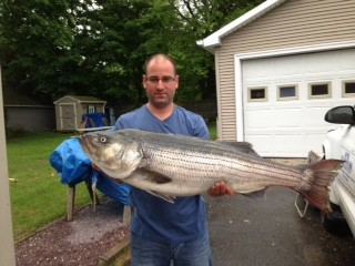 Big bass caught drifting live Atlantic Menhaden: Kevin Bettencourt of East Providence landed this 31.8 pound bass in the upper bay.  The fish was 42 inches long and had a 25 inch girth.