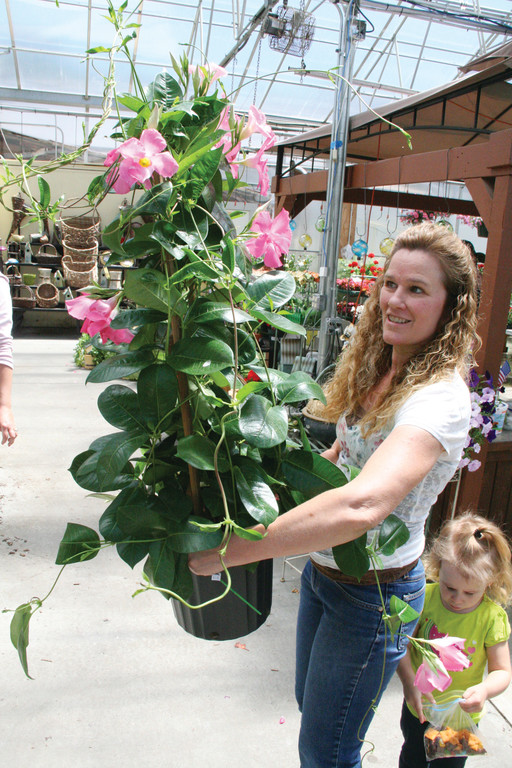 JUST LIKE THE TROPICS: Robin LaRoche , shopping with her daughter, pick out a flowering mandevilla from the Confreda greenhouse in Cranston.