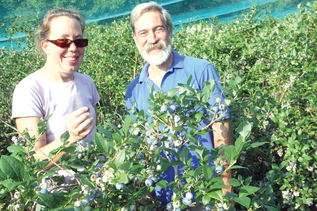 LOVING IT: This is their second year as owners of the Rocky Point Blueberry Farm and Rhonda Shumaker and Joe Gouveia say what they are doing is wonderful.