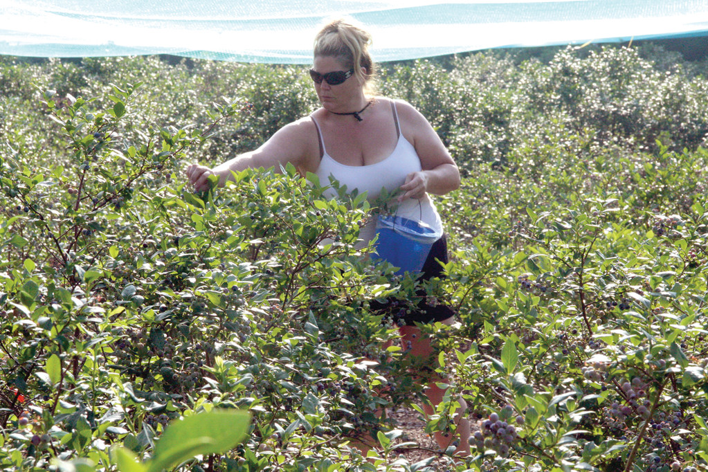 SHE RECOMMENDS PICKING: Rhonda Hastings calls blueberry picking a marvelous experience that she recommends to friends and those new to the area.