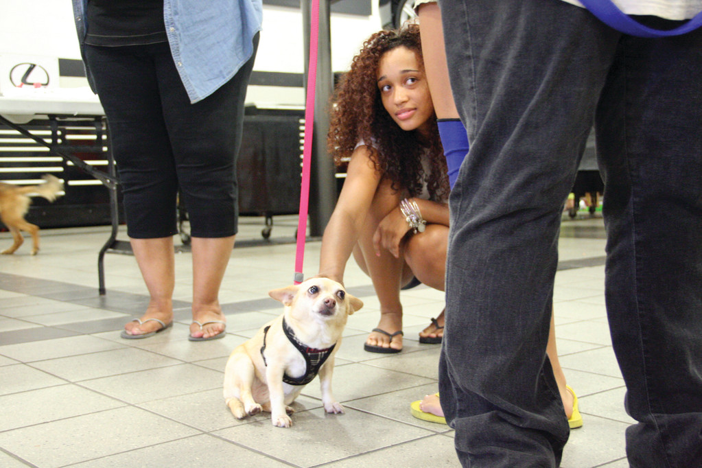 FRIENDS: Adina Silva meets Zoe at Sunday's adoption event.