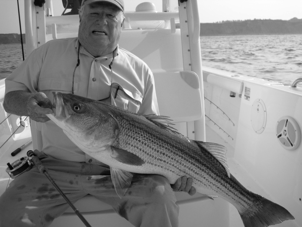 Striped bass prize: Joe Hebert of East Greenwich, RI with a striped bass he caught while fly fishing with Capt. Ray Stachelek.
