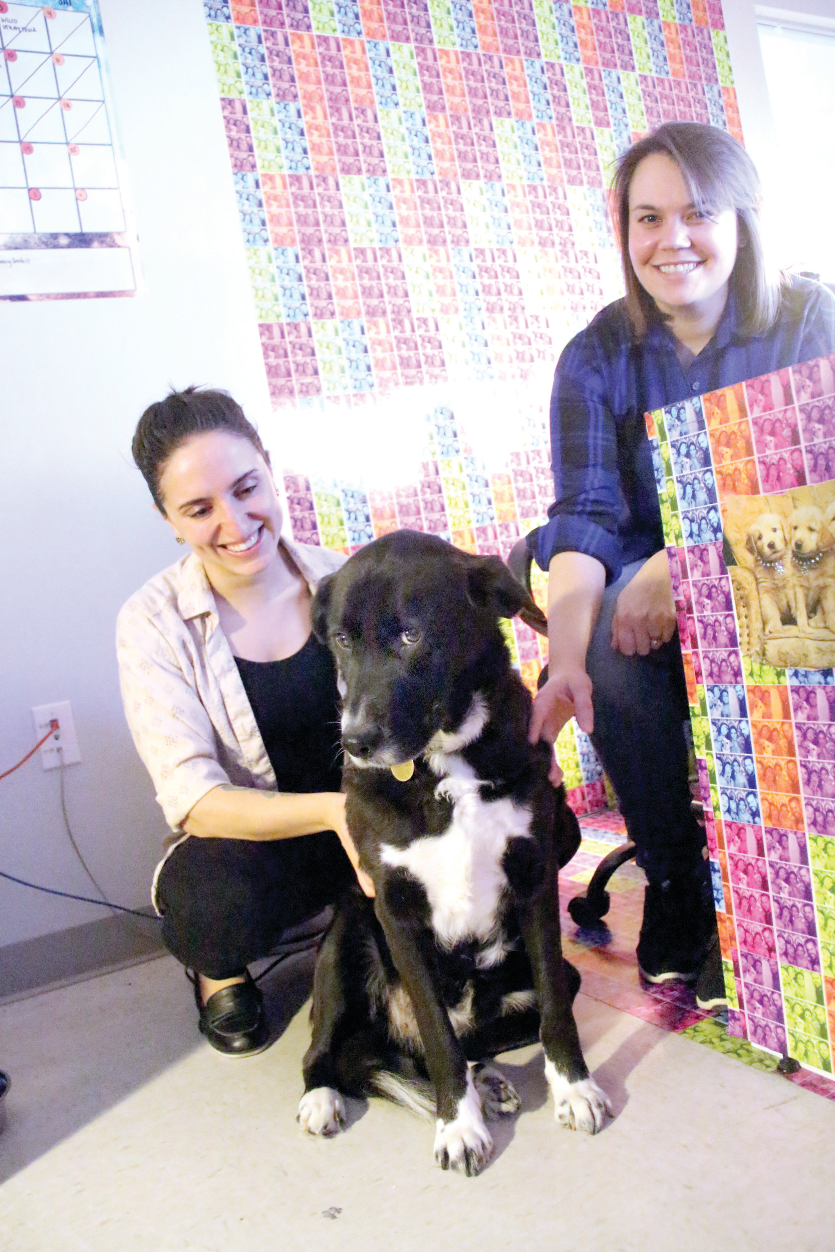 PART OF THE TEAM: Karen, a Labrador retriever mixed breed rescue dog from Tennessee, enjoys the attention of her owner, Danielle Zarrella, and Lindsay Webster, both graphic designers at Bori Graphix in Warwick. The company allows employees to bring their pets to work.