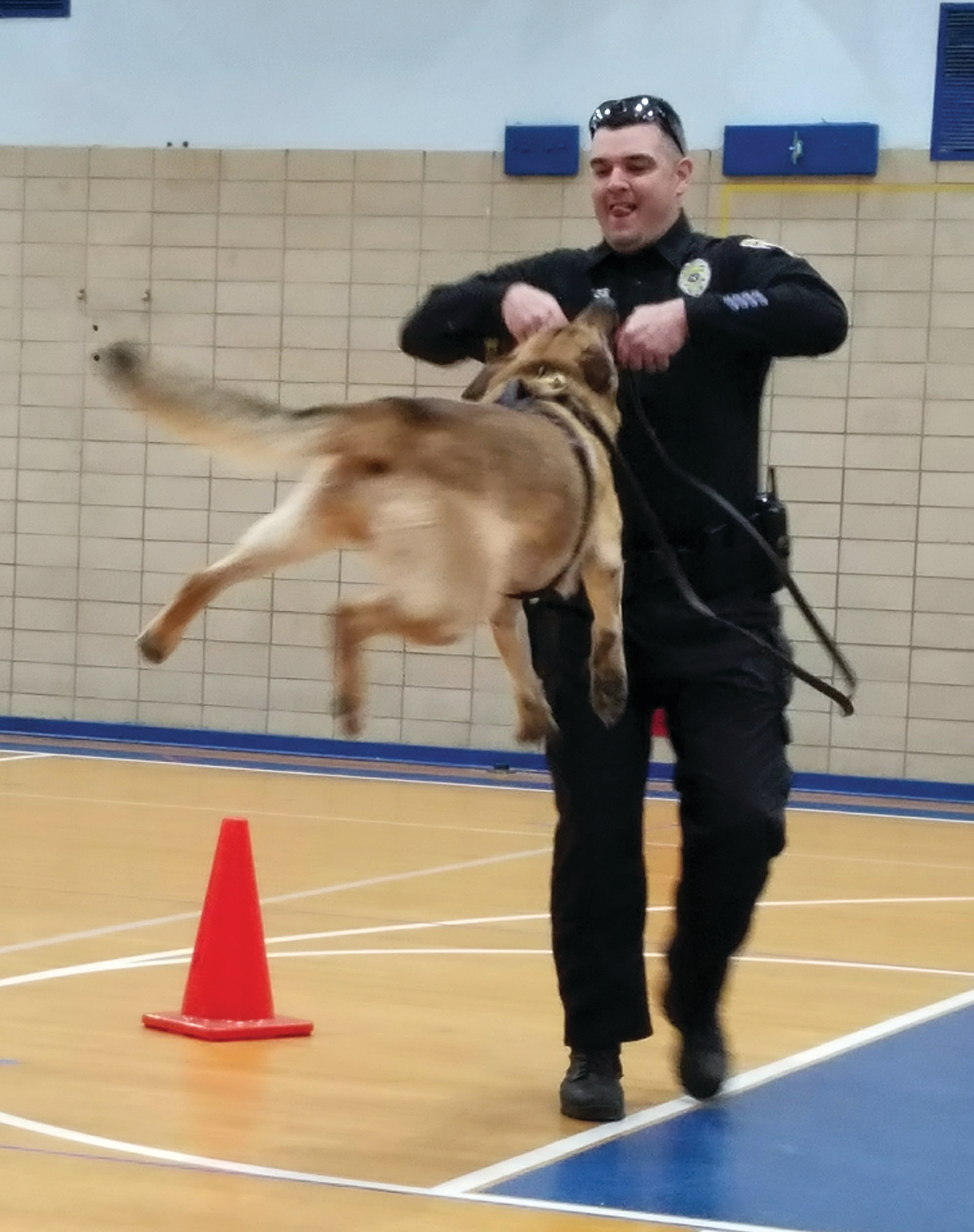NOT LETTING GO: Officer Bagshaw demonstrates just how strong the dogs' grips are. Here, he rewards Lex with a toy and is able to lift the dog up, still hanging on to the toy.