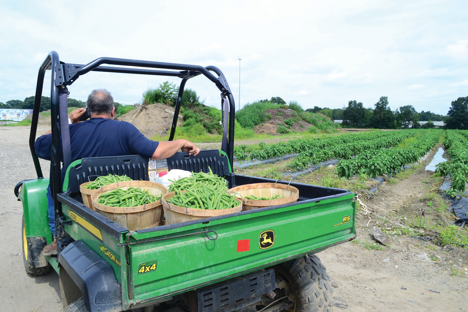 "LATE CUT: Paul Sullivan ""crimps"" the cut hay at Morris Farm, the first cut of the season."