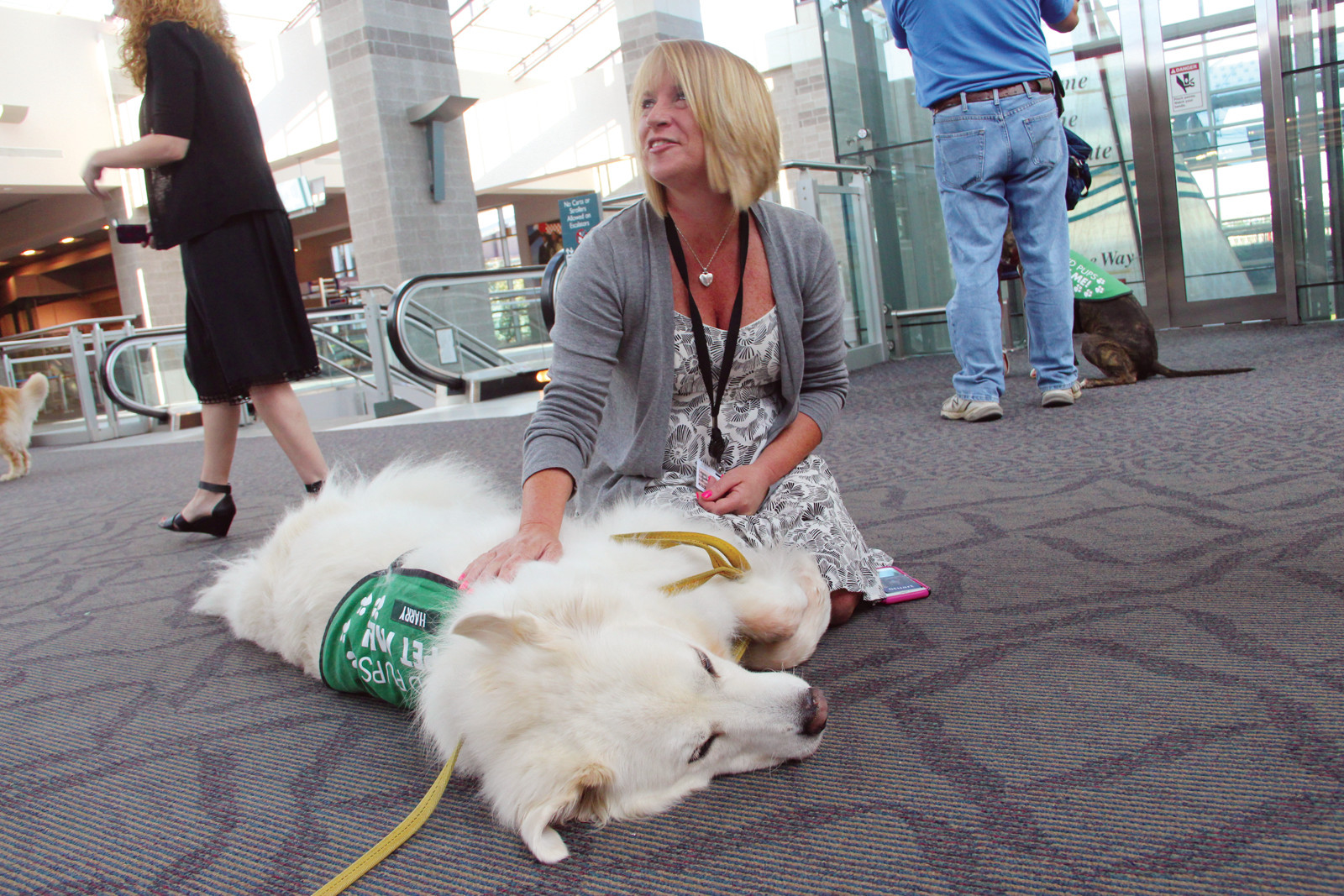 LOVING IT: Harry the Great Pyrenees enjoys a pet from PVD Pups co-founder Liberty Luciano.