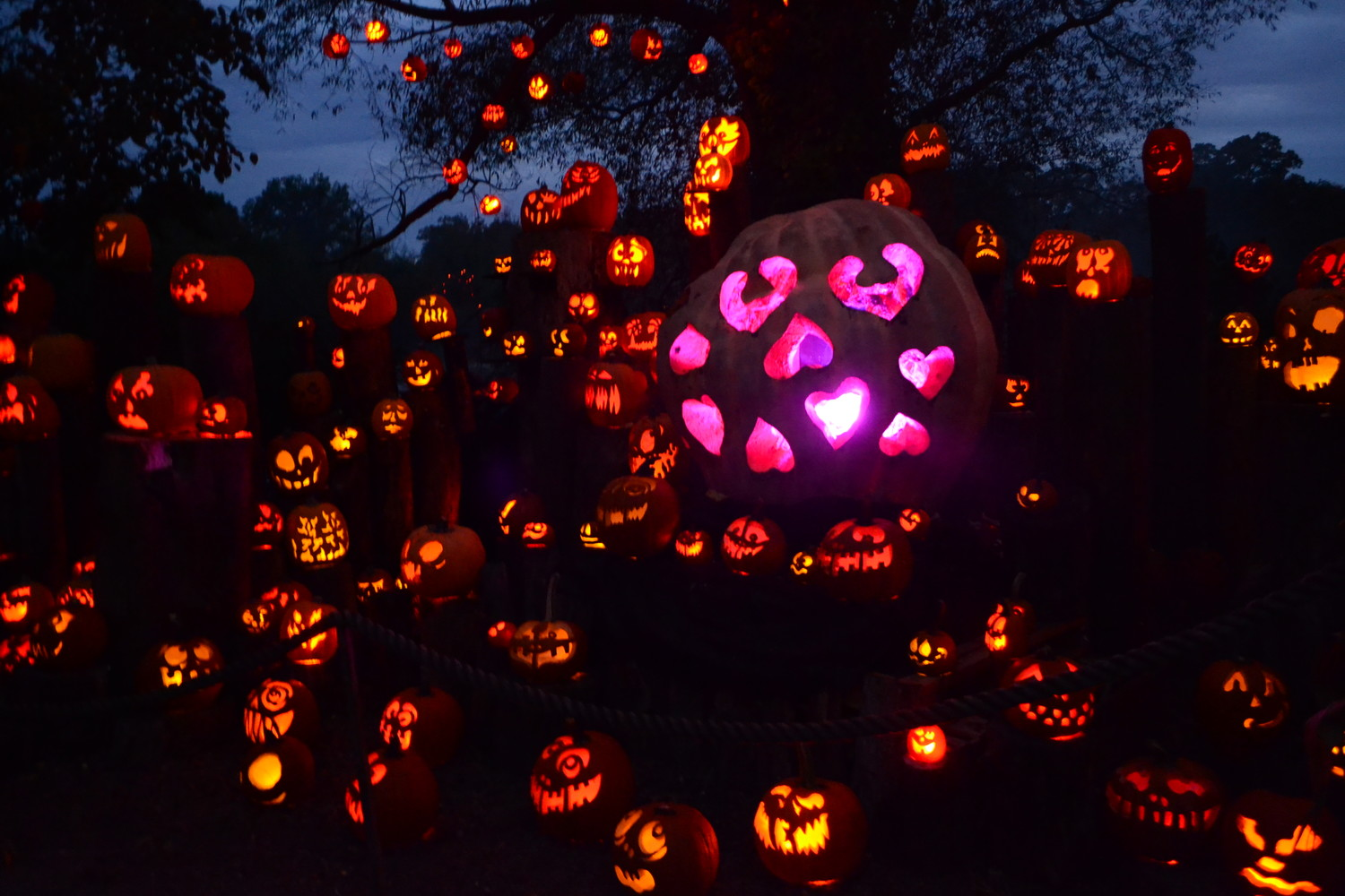 When the lights go down, the Jack-O-Lantern Spectacular takes on a whole new life.