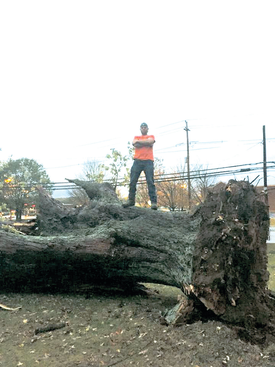 MIGHTY TREE FELLED: This 200-year-old maple tree had withstood every hurricane on record in Rhode Island but fell after Sunday night. Shawn Crisostomi, who reported that thankfully nobody and nothing was harmed by the tree, said he planned on making a table out of the downed giant.