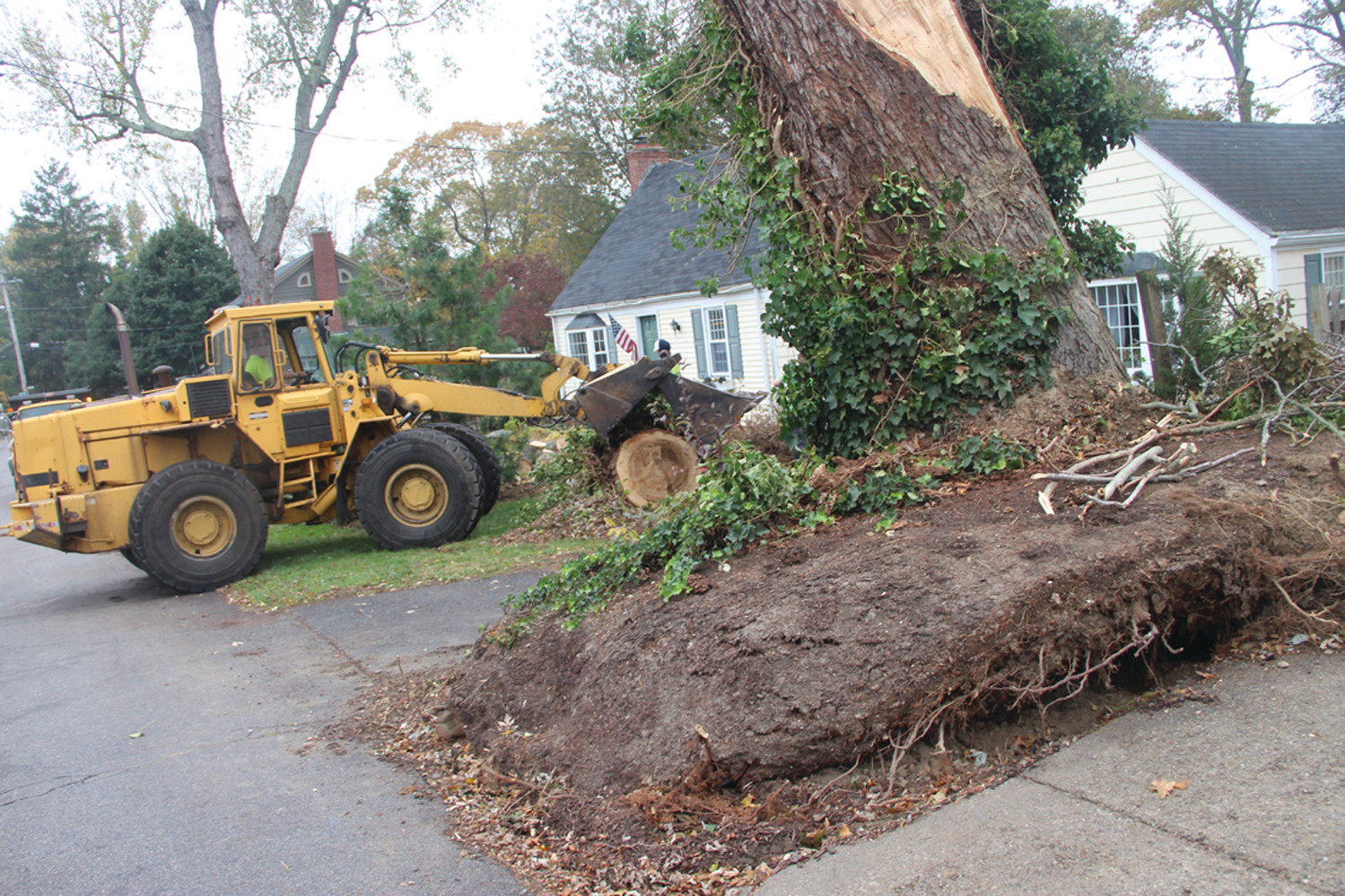 BLOWN OVER: The storm's winds that were clocked at a high of 81 miles an hour at Conimicut Point uprooted this tree on Pleasant View. By Monday, city crews had most of the tree cut up with the exception of several large sections and the main trunk that stood up after being relieved of its branches.