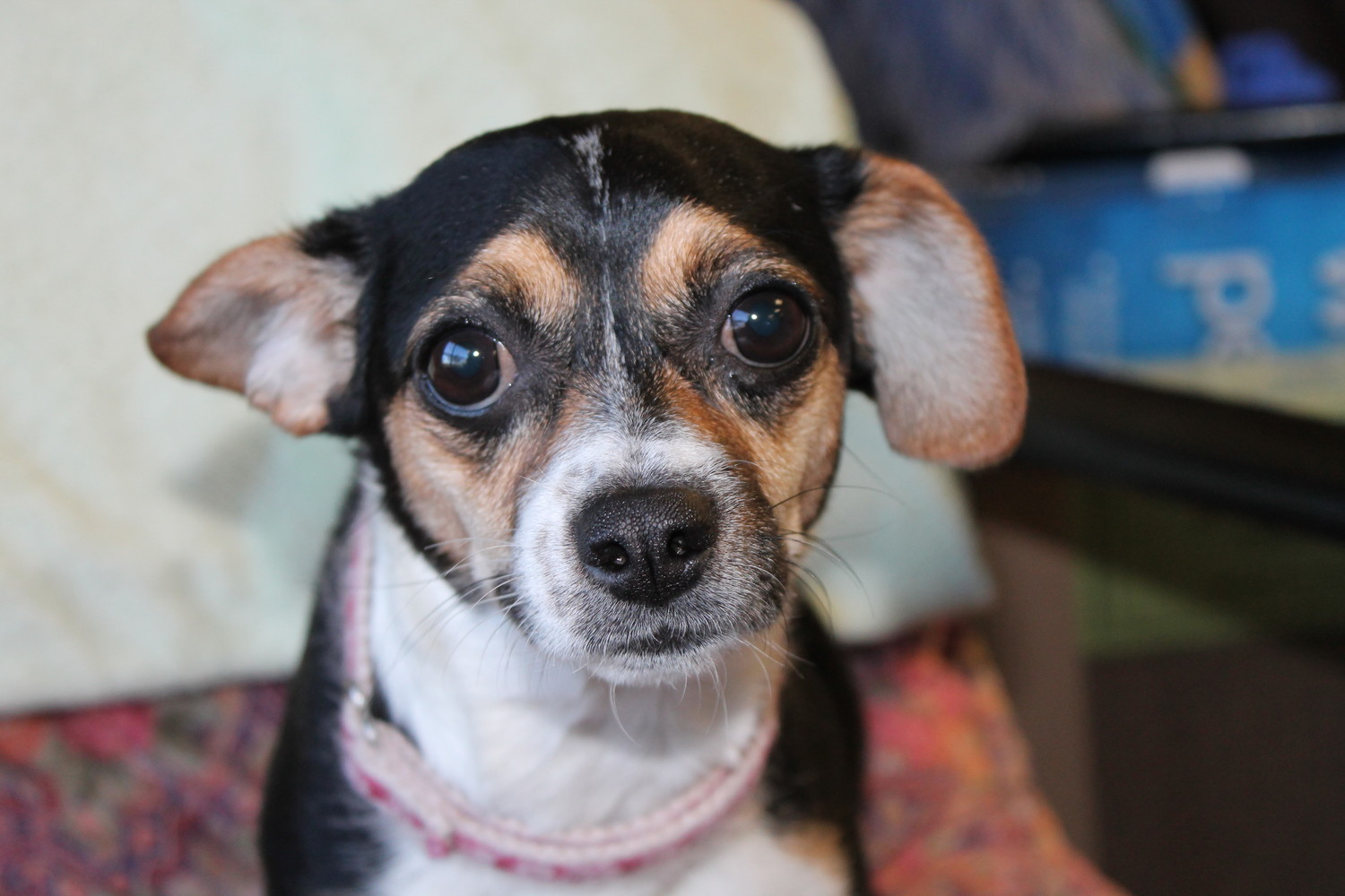 Ripley is wondering if you perhaps have room in your home for her. She's really little and wouldn't be a bother.