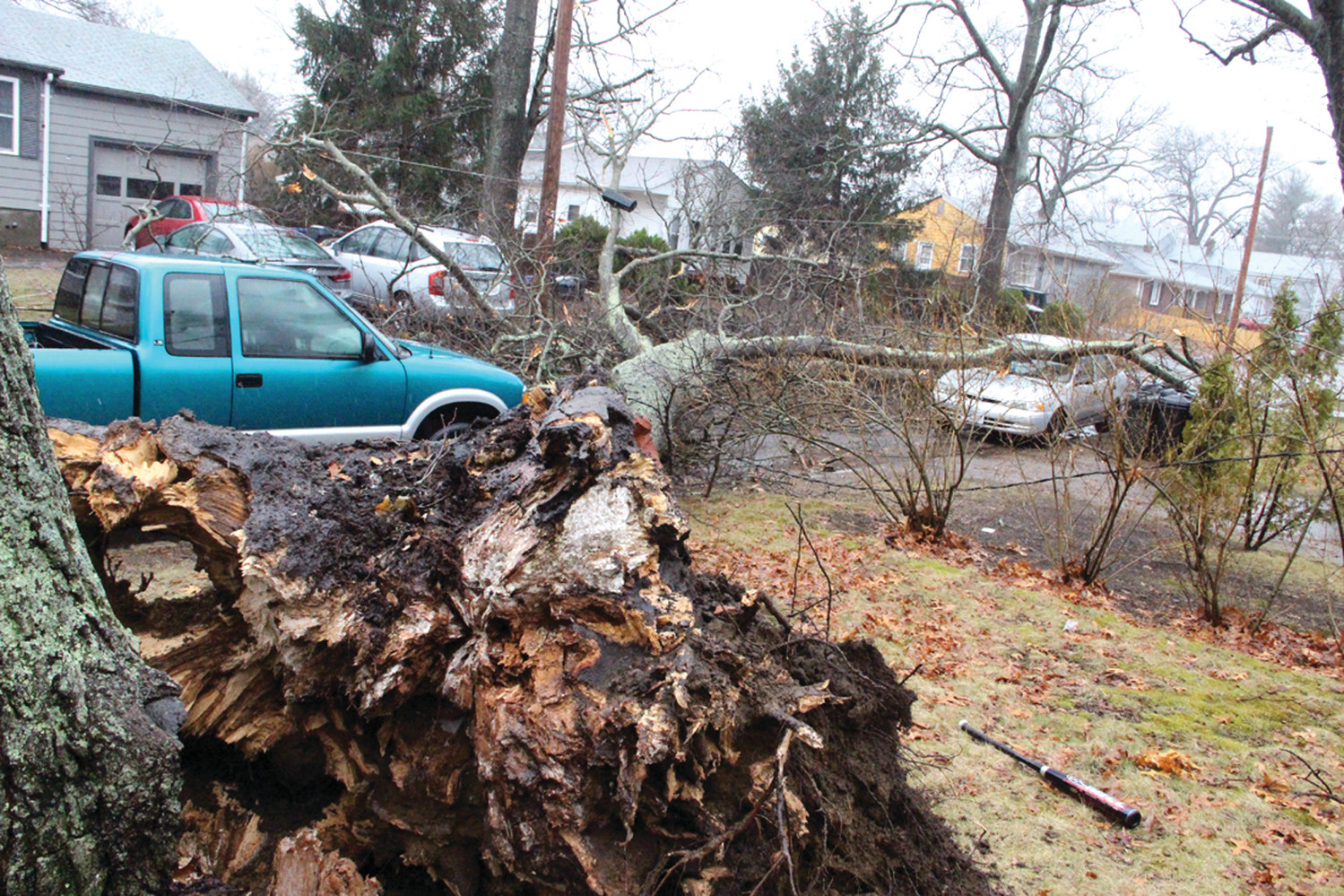 UPROOTED: A tree crashed to the ground Friday afternoon on Merle Street, damaging a parked car and, fortunately, avoiding serious damage to homes.