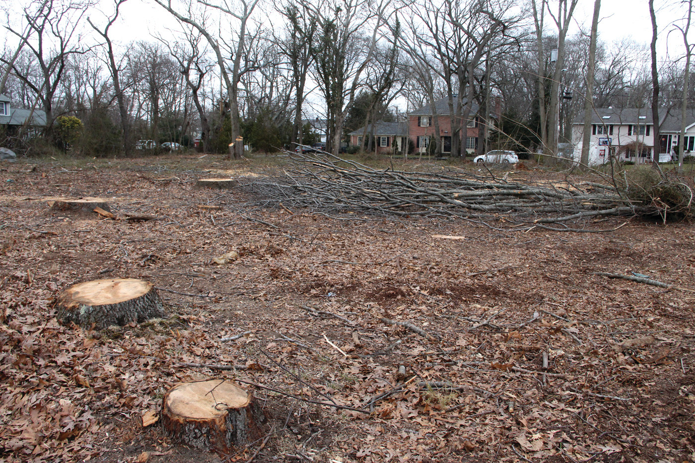CUT TO THE GROUND: More than 30 trees were felled on city land on Lansdowne Road on April 5 and 6 as a site for the staging of sewer construction equipment and supplies. The Sewer Authority has since found another location.