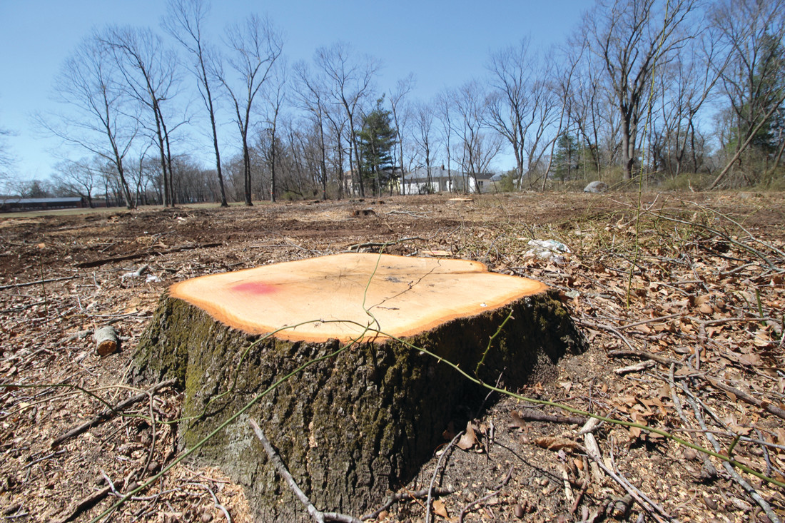 NUB OF THE PROBLEM: Stumps are all that remain of an area cleared of more than 40 trees. Neither the Sewer Authority nor the school department, which owns the land, say they were aware of the extent of the clearing until it was completed.
