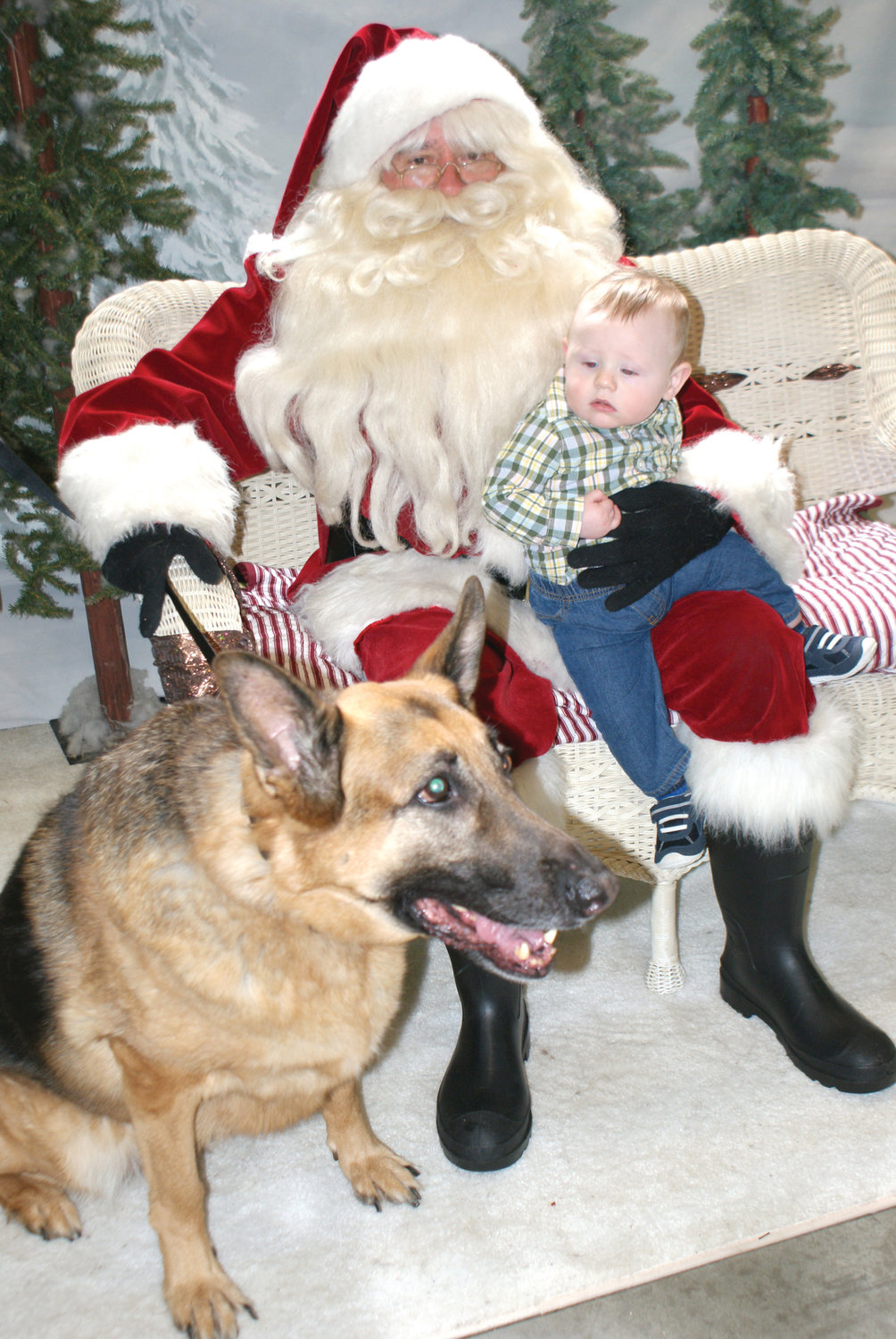 FIRST CHRISTMAS: Enjoying his first Christmas with his dog, Daisy, an 8-year-old German Shepard was Liam Driscoll, 8 months old, at Pet Supplies Plus in Garden City Center