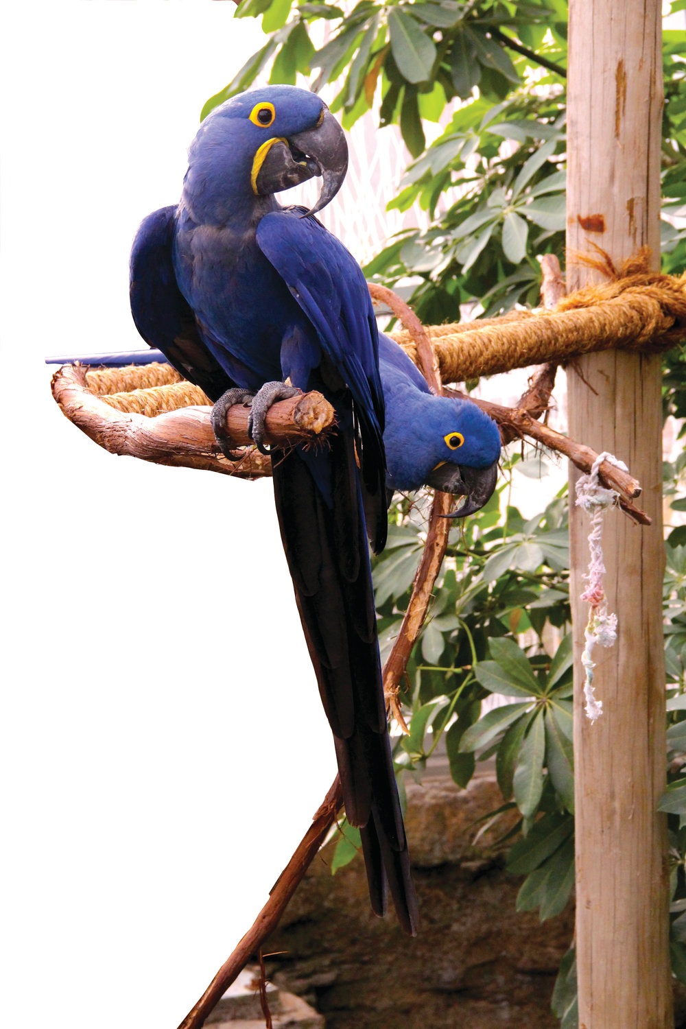 ALL SORTS OF NEW FRIENDS: The hyacinth macaws always take an interest in rain forest visitors, as do the monkeys and the river otters.