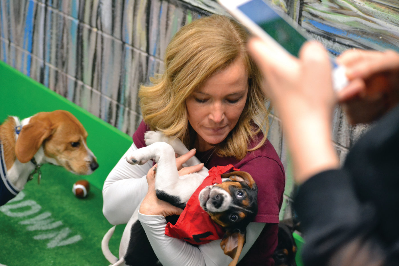 SUPER MOM: Leslie Summer wrangles one of the puppies during the East Greenwich Animal Protection League's Puppy Bowl. Summer is actually fostering 11 of the puppies in her own home, which also has other dogs she has fully adopted.
