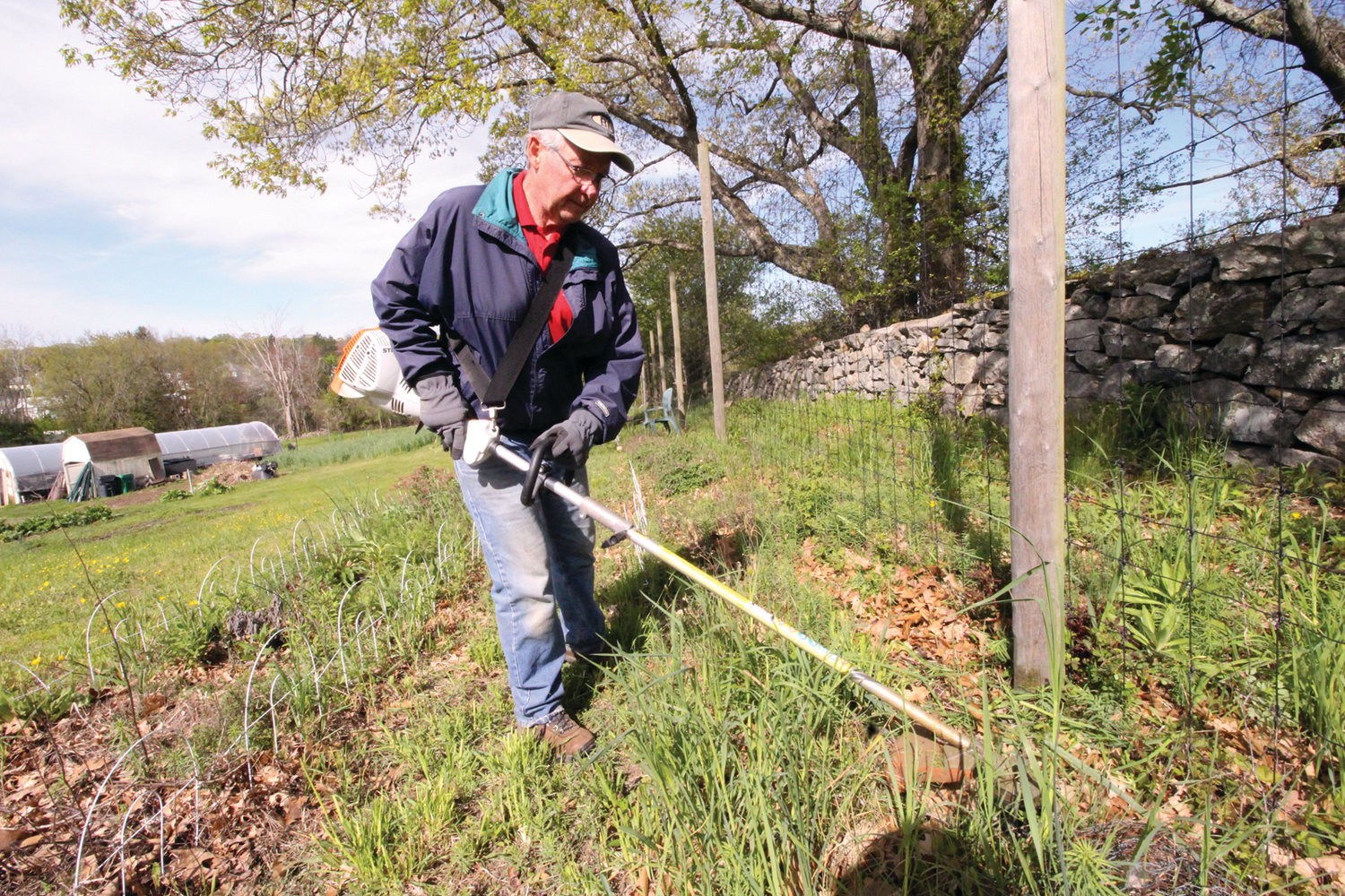 TRIMMING THE EDGES: Tom Sanford walked the perimeter of the farm on Centerville Road to trim back the growth of weeds and grass.