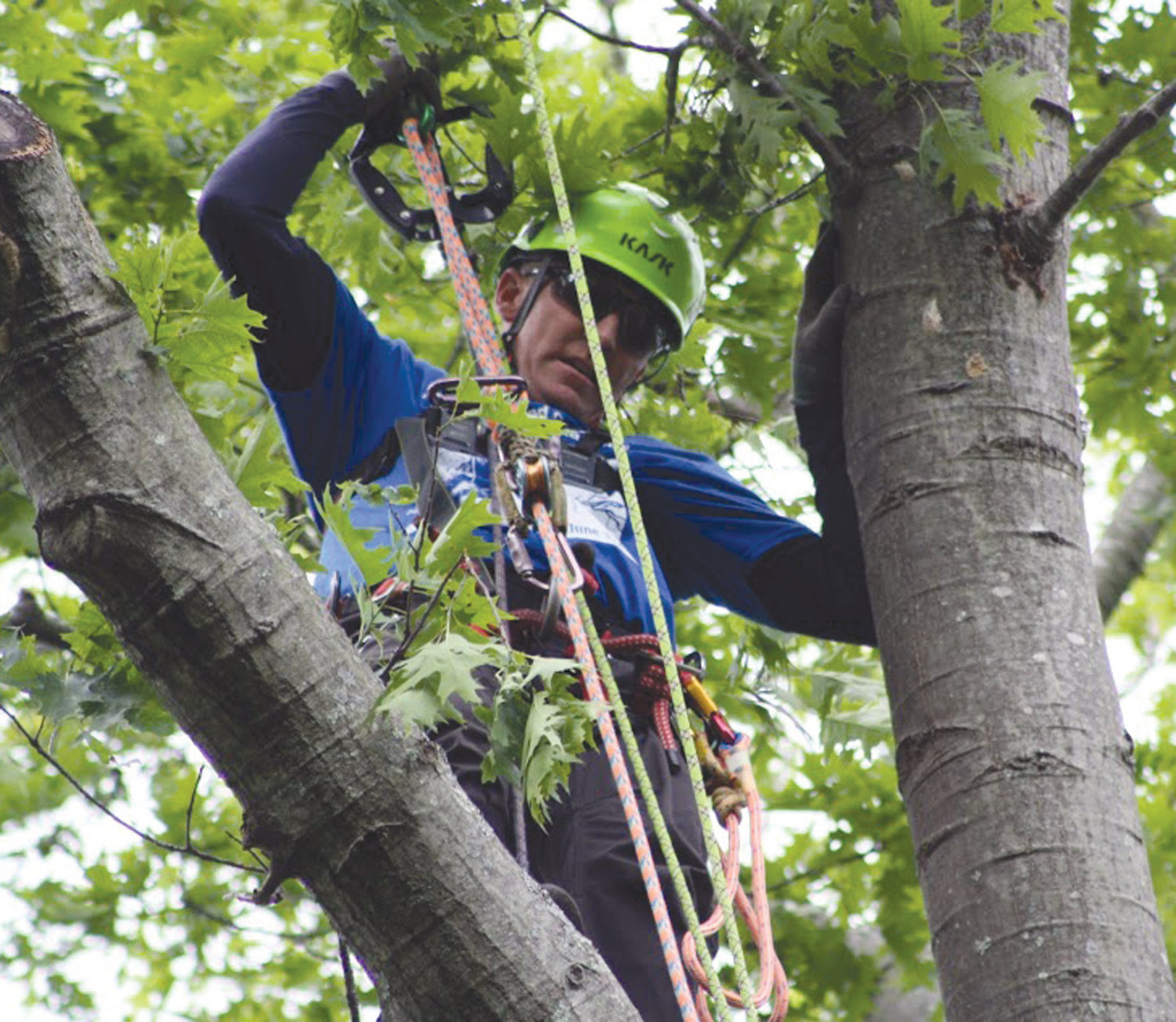 TIME TO CLIMB: Tree climbers will clamber to Warwick for Saturday's competition.