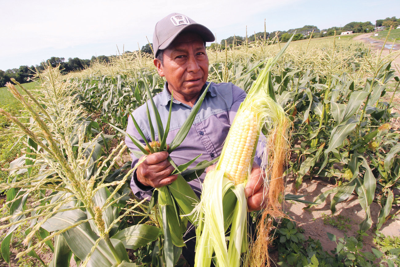 FRESH AND SWEET: Felino Guliertez, who started working at the farm 14 years ago, displays a fresh-picked ear of sweet corn from Warwick fields.