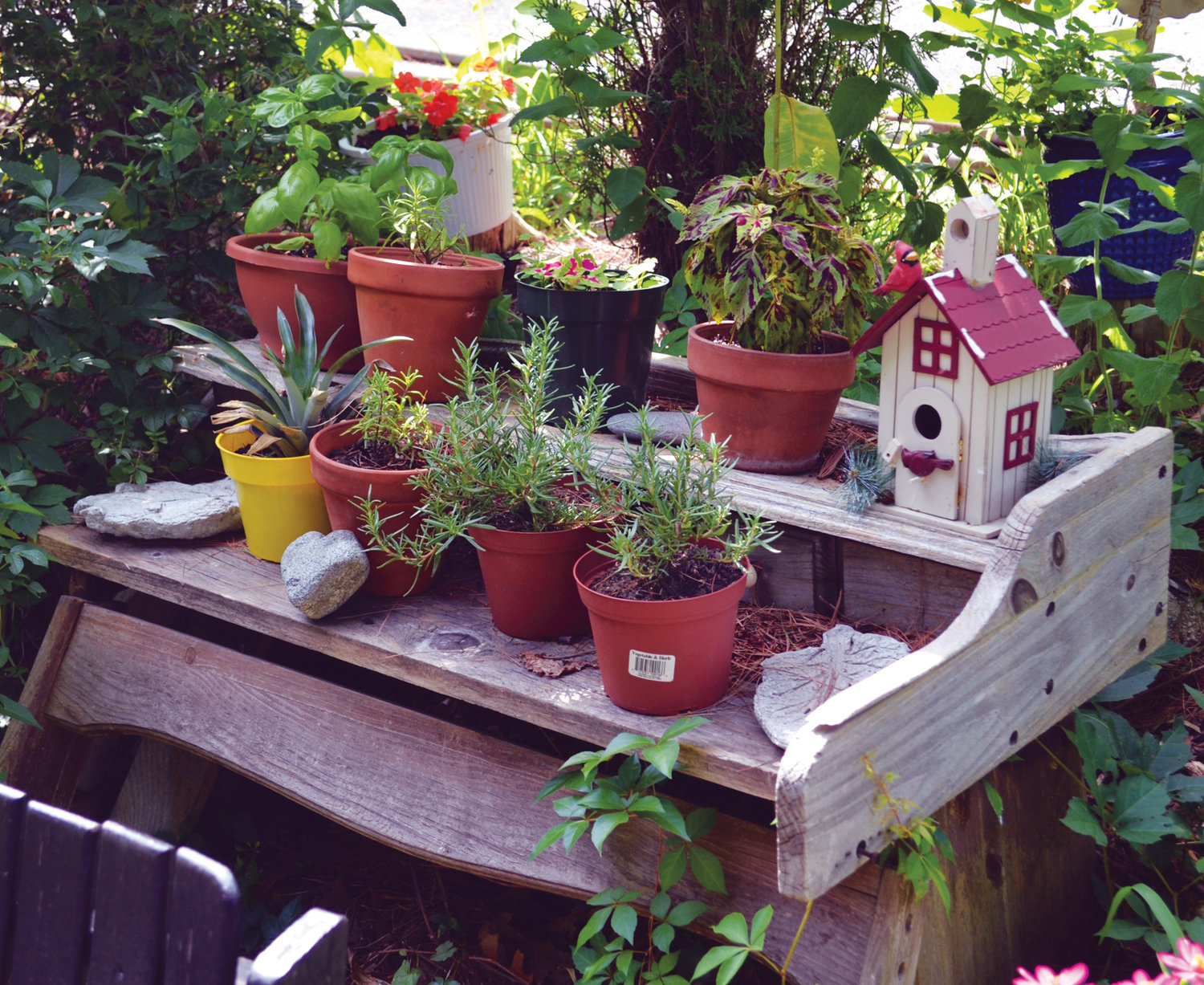 Potted plants on a workbench in Karen's garden.