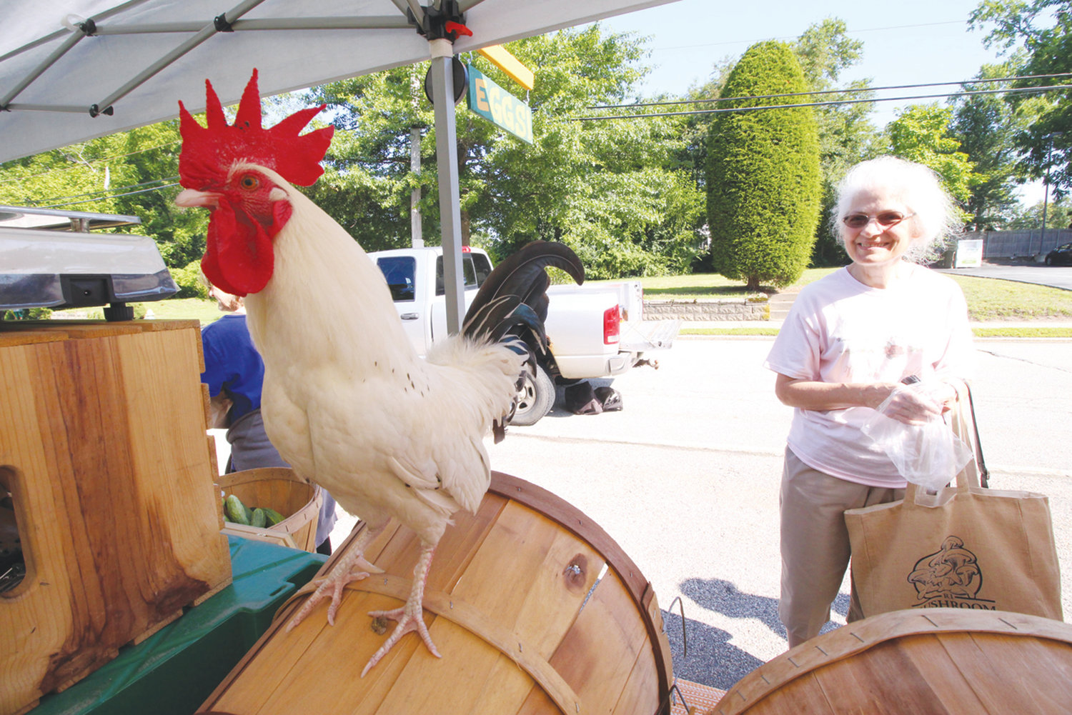 RULE OF THE ROOST: In this August photo, Moe poses atop a barrel at the gC Farms stand at the Pawtuxet Village Farmers Market on Saturday as Sandra Cooper looks on. The rooster serves as an unofficial mascot for the market.