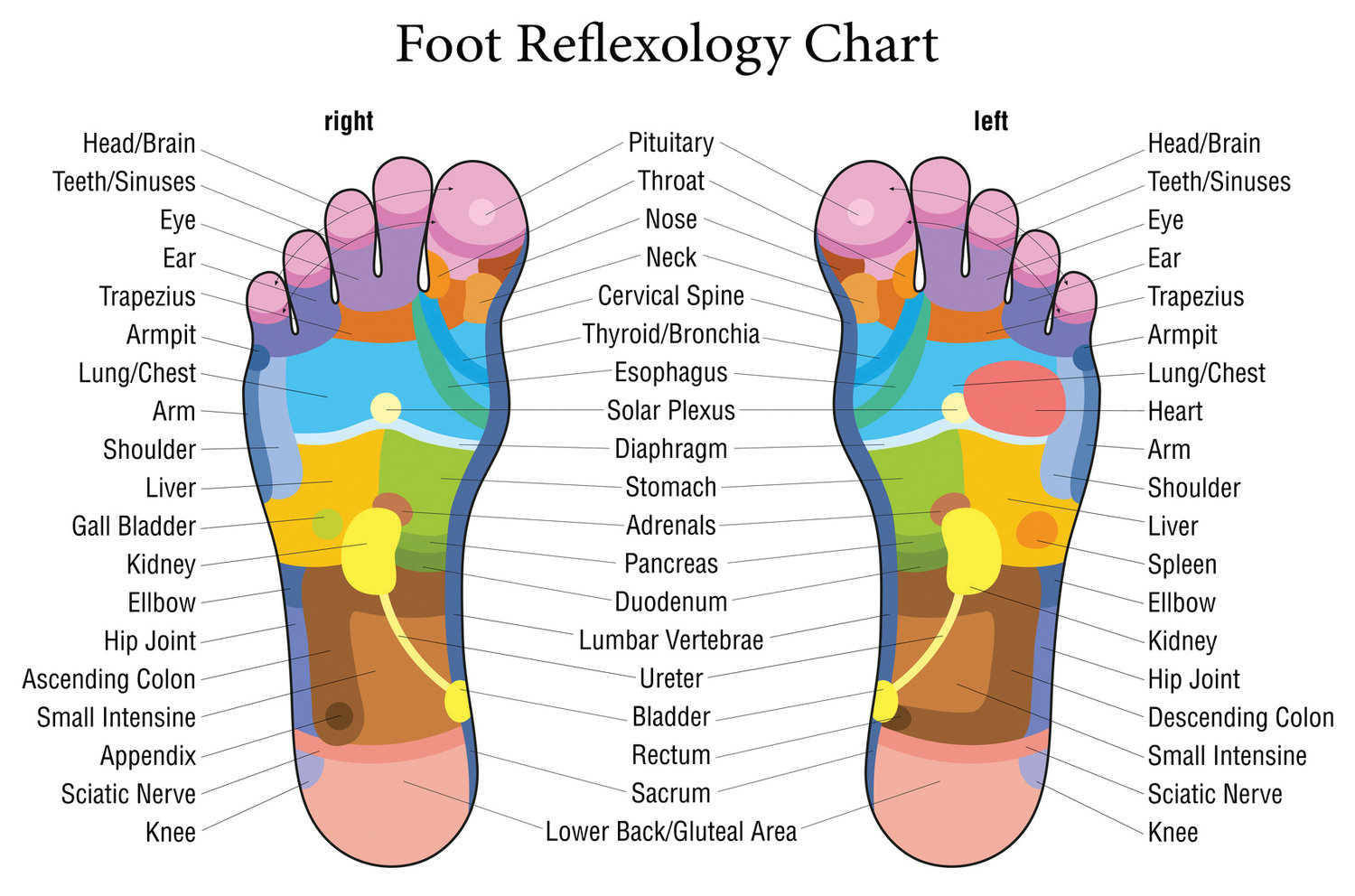 This diagram illustrates the complex nature of the human foot. Using a guide like this, reflexologists at Chen's Reflexology on Reservoir Avenue in Cranston provide clients with relief from pain and anxiety by putting pressure on specific parts of their feet.
