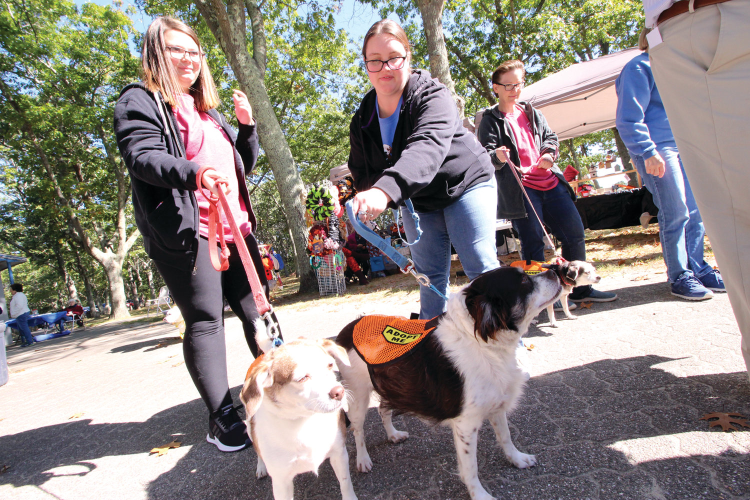 LOVING THE ATTENTION: Two of the Warwick Animal Shelter dogs up for adoption greeted those attending the Friends of the Warwick Animal Shelter event Saturday at City Park.