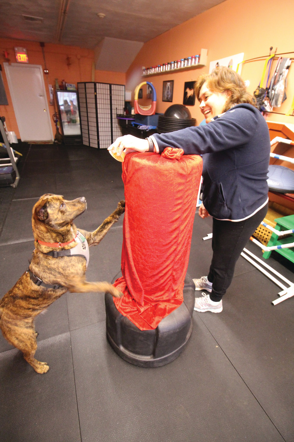 DOG WITH A PUNCH: Deb Quattrini works with Hunter on his punching – actually a stretch.