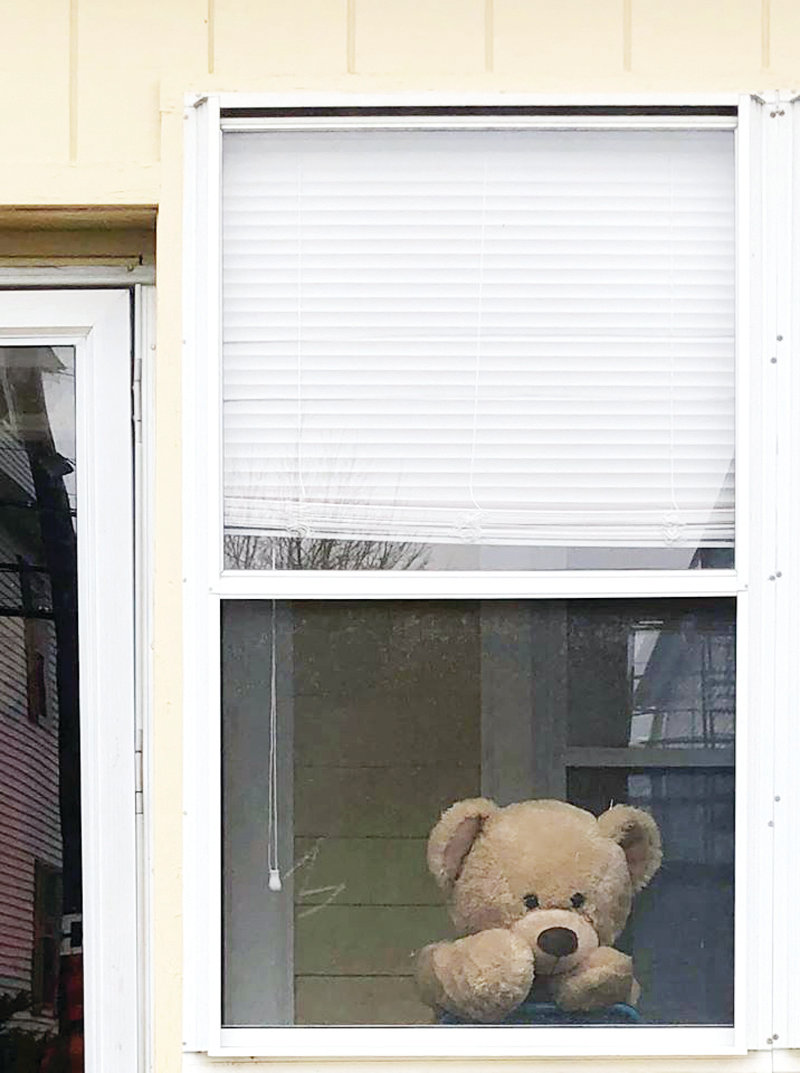A bear tentatively peaks out of a Johnston window.