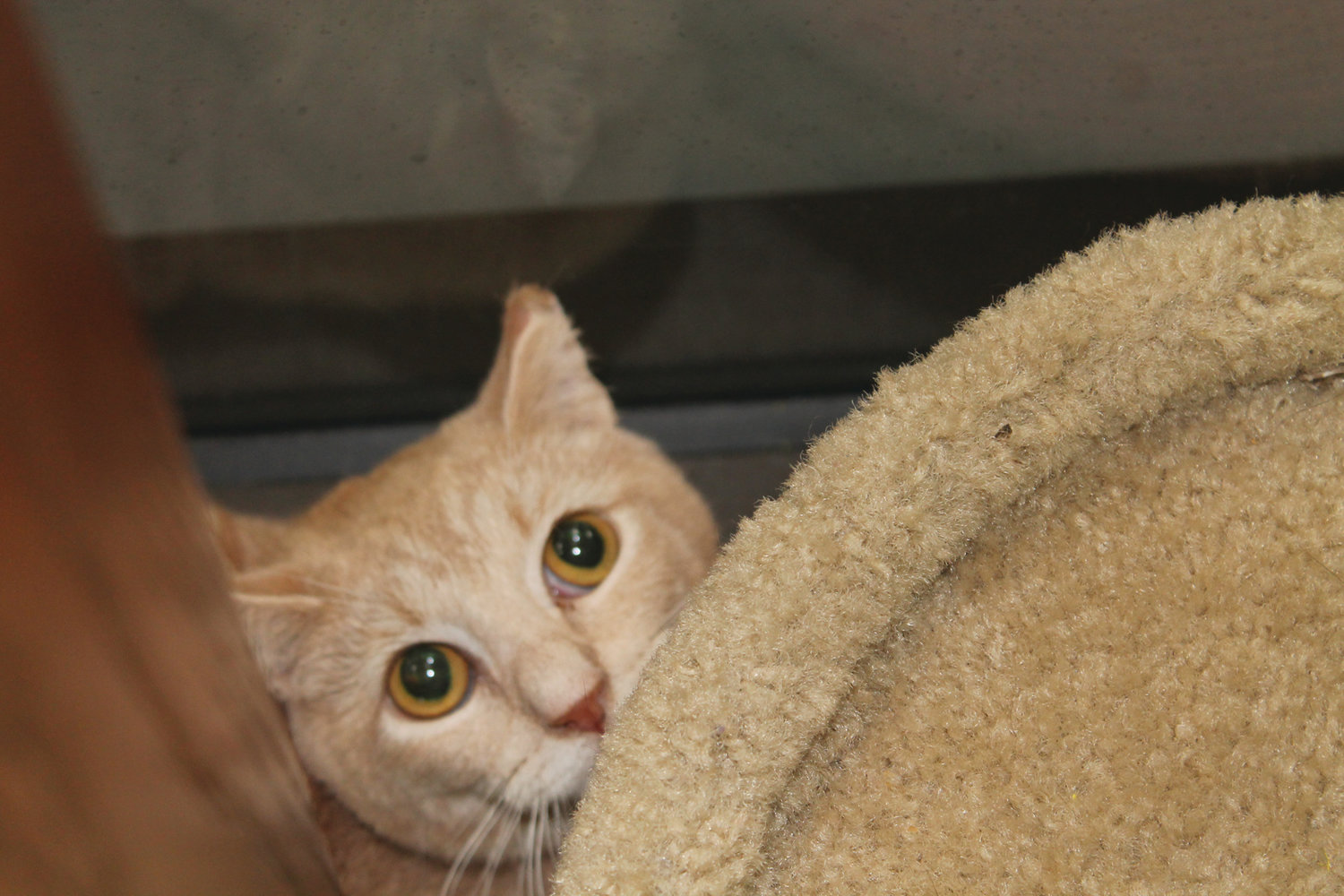 IN NEED OF A HOME: One of the more than 40 cats Pawswatch is seeking to place in a good home.